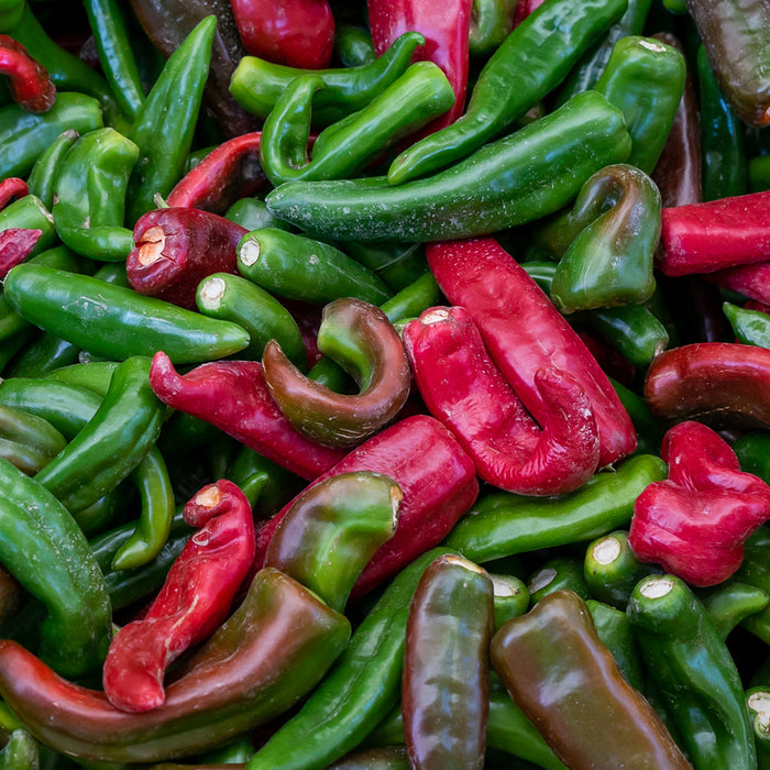 Fresh Hatch Pinto (Red & Green) Chile Peppers