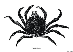 THE SPIDER CRAB