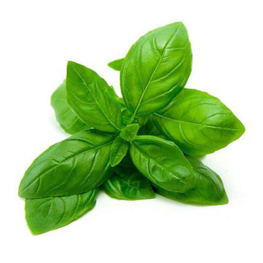 Teouma Valley Farms Basil (bunch 100g)