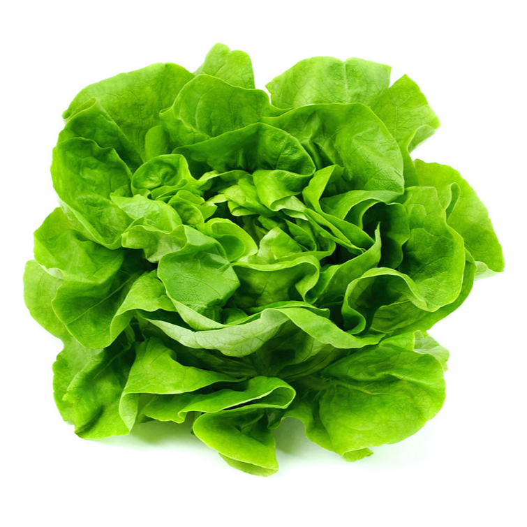 Teouma Valley Farms Butter Lettuce, Minimum of 2 per bag (Each)