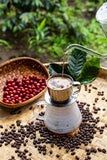 Gourmet Coffee - Peaberry - Divine Coffee by Divine Spices