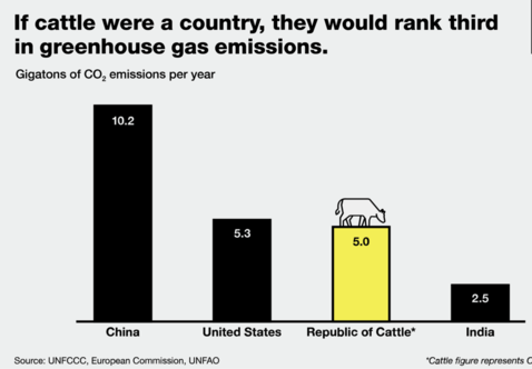 If cattle were a country they would rank third in greenhouse gas emissions graphic
