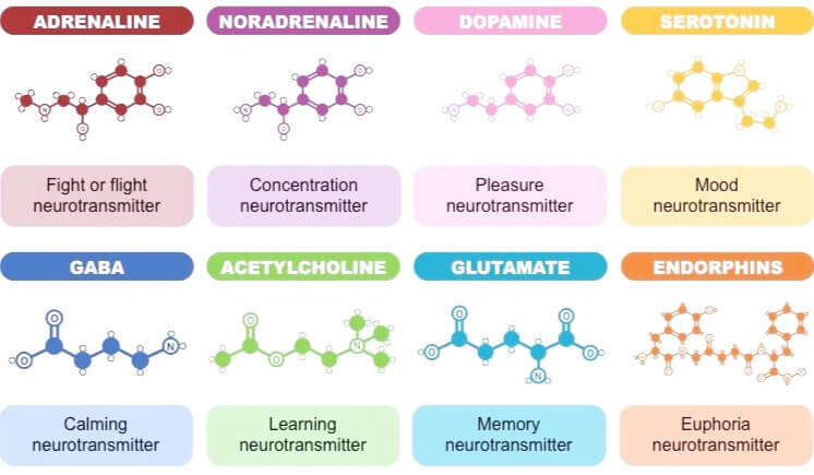 types-of-neurotransmitters