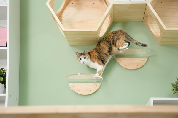 How to choose a proper size of cat shelf for your cat | MYZOO Design