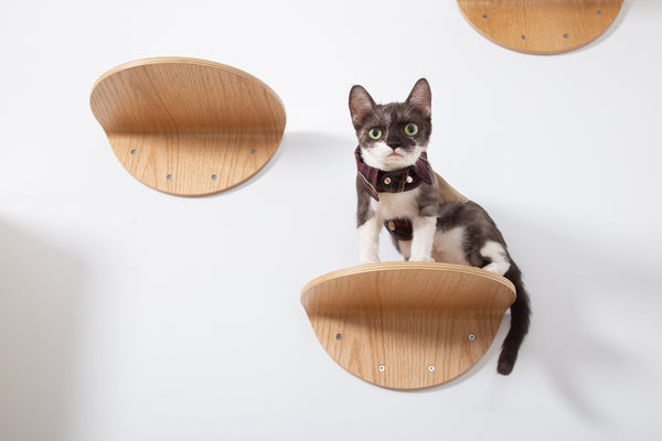 How to choose a proper size of cat shelf for your cat
