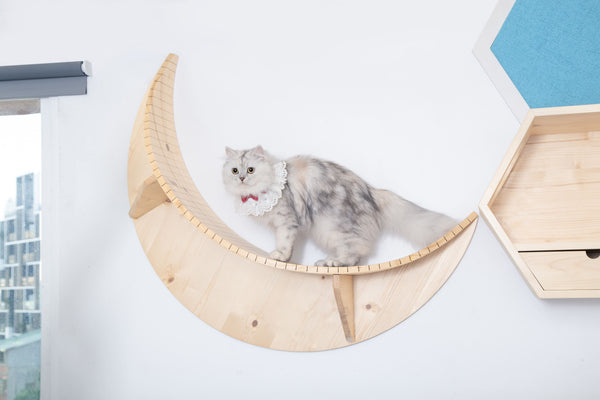 There is an American Short Hair cat walk on a cat shelf, LUNA, made by solid wood, designed by MYZOO. There are other wall-mounted cat shelves as aside.