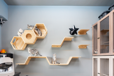 Wall-mounted cat shelves can be a decoration of the wall.