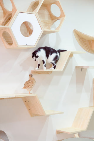 Floating Cat board can install freely in various ways.
