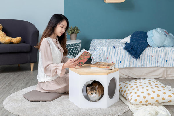 Cats stay in Busycat, a hexagon wooden cat furniture made by Myzoo.