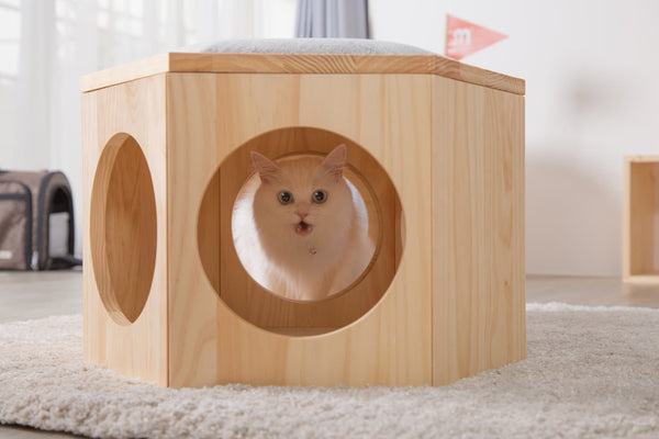 A white cat sneak peak through the hole on hexagon type Busycat shelf which can also transform into a piece of chair.