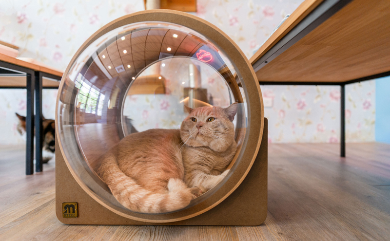 A Free Cat Bed From MYZOO