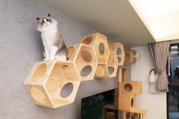 A cat look out from the hole of Gamma cat bed which include a transparent acrylic dome.