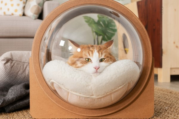 A fluffy cat stay in a cat bed with relaxation. Cat lovers can totally see their cats cuteness from the outside. It is an cat bed made with acrylic dome and pinewood in walnut color.