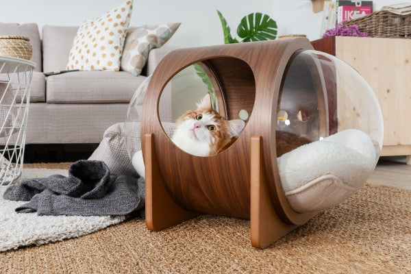 Cats can see through the transparent acrylic hold by the tunnel. It can contain any kinds of beds or cushion cats are used of, the spaces is big enough for big cats or two cats. Alpha cat bed fit with the interior design and living furniture very great as well. It is cat friendly furniture.