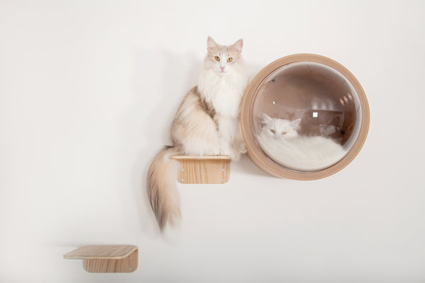 MYZOO-Lack: Wall Mounted Cat Shelves