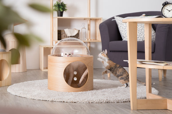 Gamma is designed to a cocoon-like cat bed that includes a clear acrylic dome.
