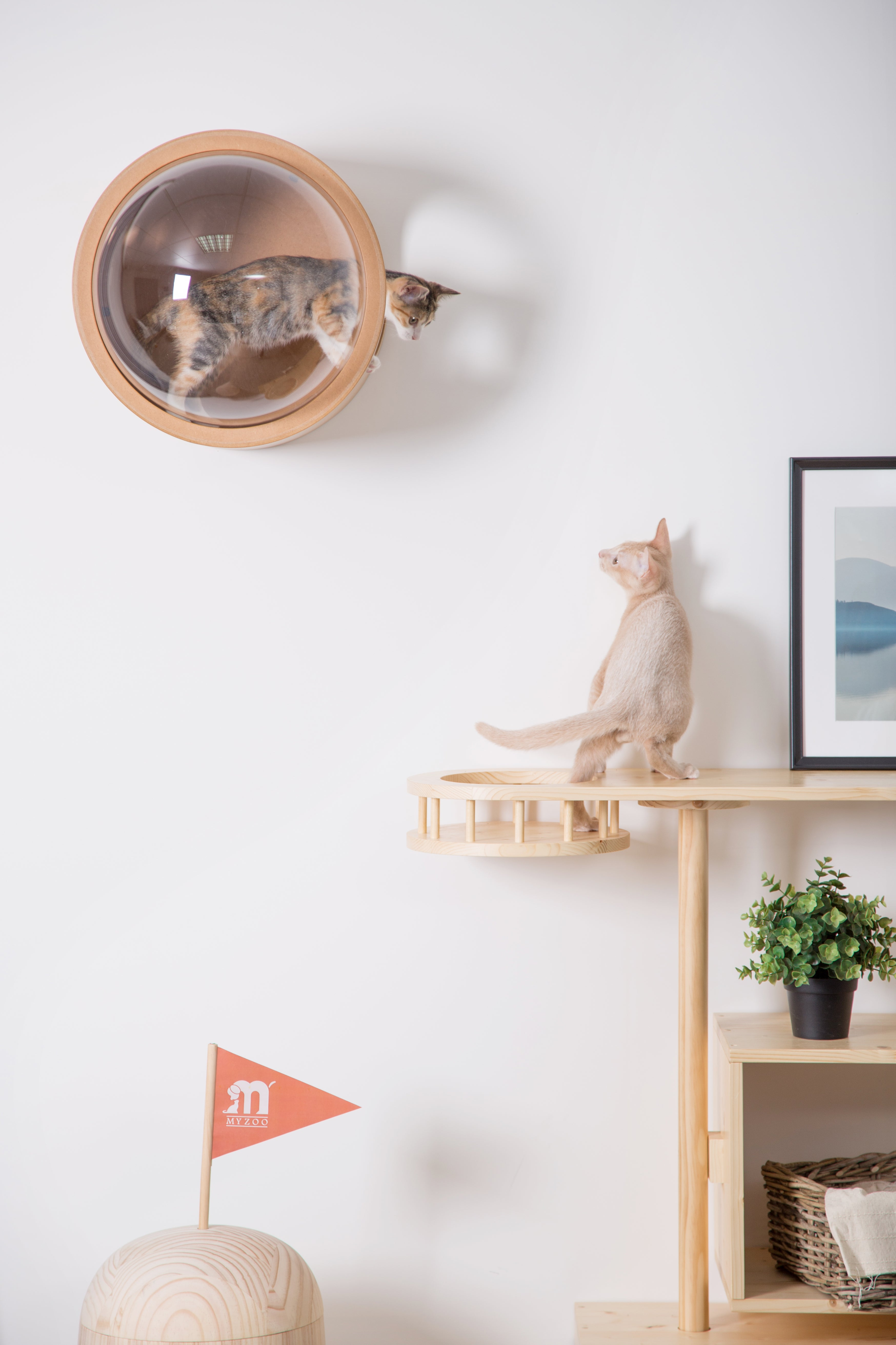 Felines can get so well with the floating cat furniture and have fun with them.