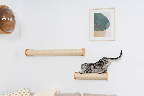 A black and white american shorthair cat is scratching on a wall-mounted cat scratcher