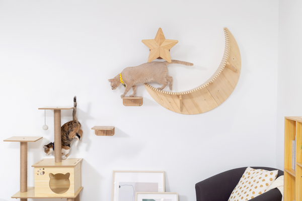 a brown cat stands on a shelf  in moon shape