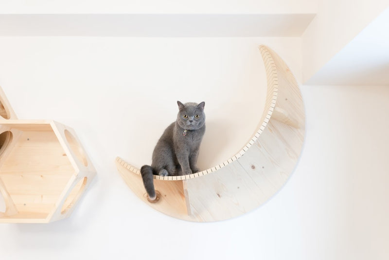 A British Shorthair Grey Cat sits on MYZOO Floating shelf Named Luna Because of its Moon Shape