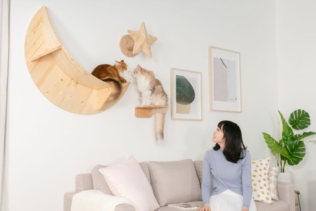 A girl looks at the cats sitting on a floating shelf named Luna, a moon-shape cat bed.