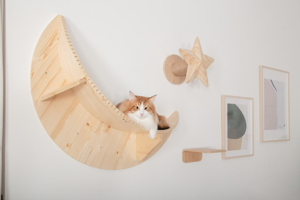 A Norwegian Forest brown cat on MYZOO Floating shelf Named Luna Because of its Moon Shape