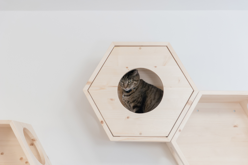 A black cat hidden in a hexagon wooden furniture which is mounted on the wall