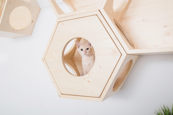 A brown cat hidden in a hexagon wooden furniture which is mounted on the wall