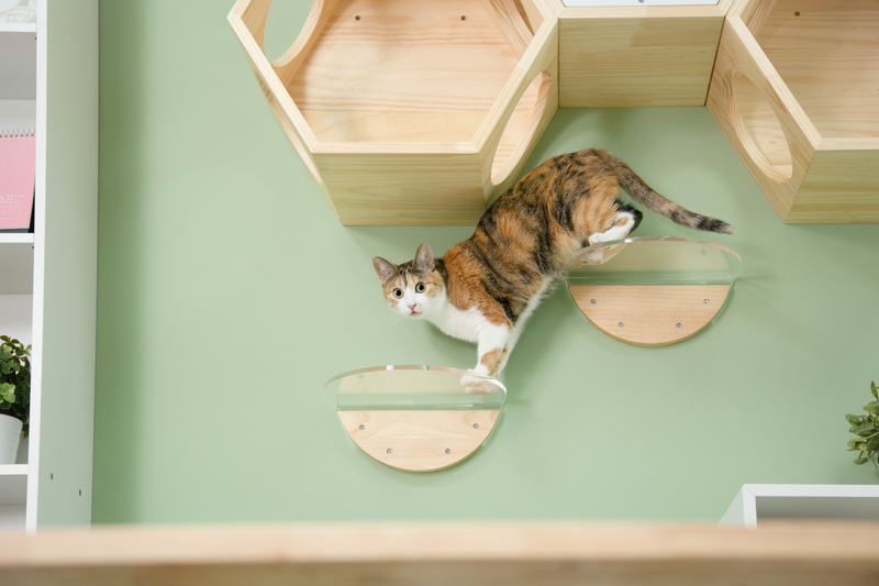 a brown cat stands on a shelf which has a transparent board.