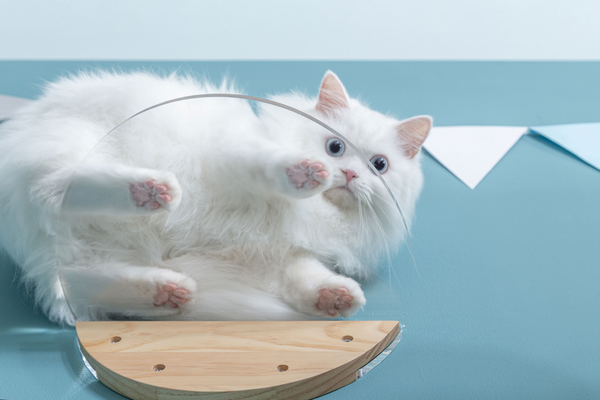 A white cat perch on a transparent cat shelf which brand is under myzoo