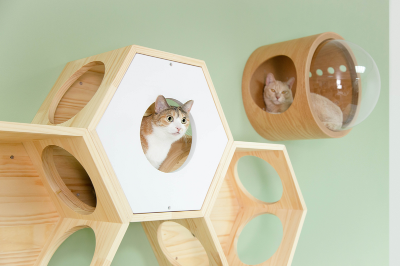 a brown cat looks outside things from a wooden white hexagon cat bed which is mounted on the wall