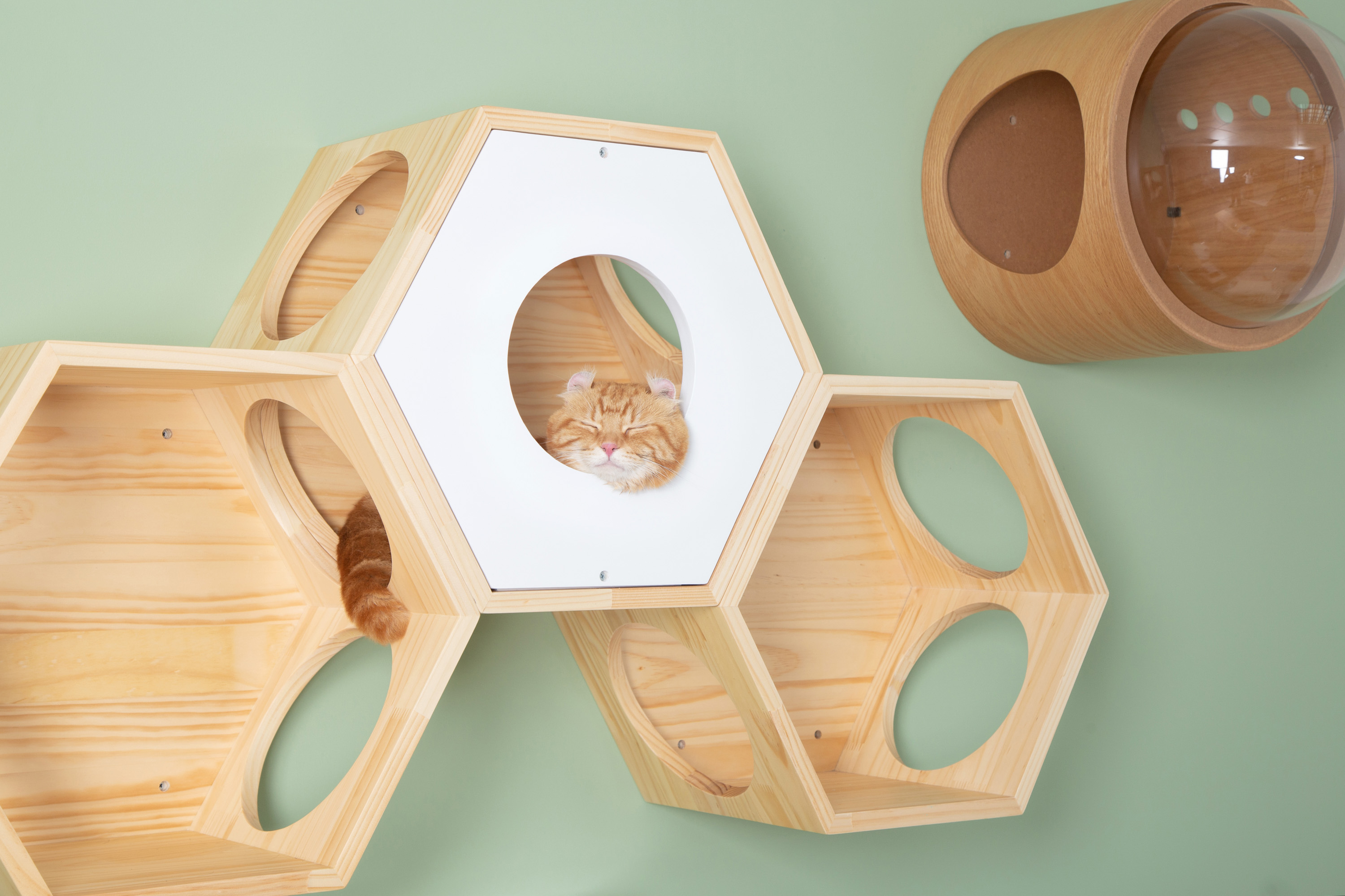 a brown cat sleeps in a wooden white hexagon cat bed which is mounted on the wall