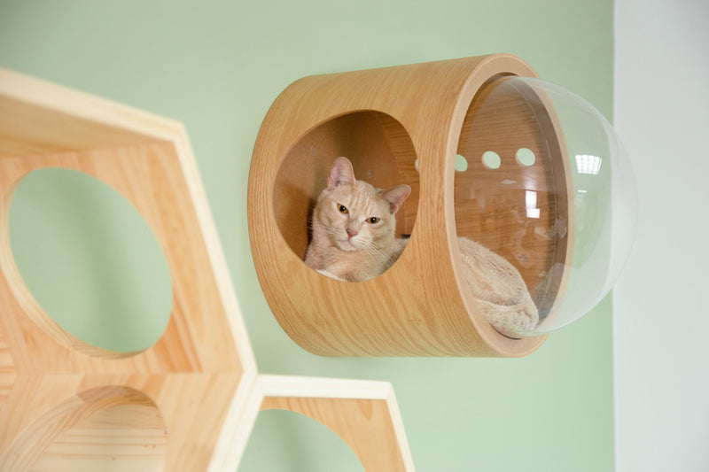 The hole on the cat bed allows cats to look to the outside. The thick wooden board provide a safe place.