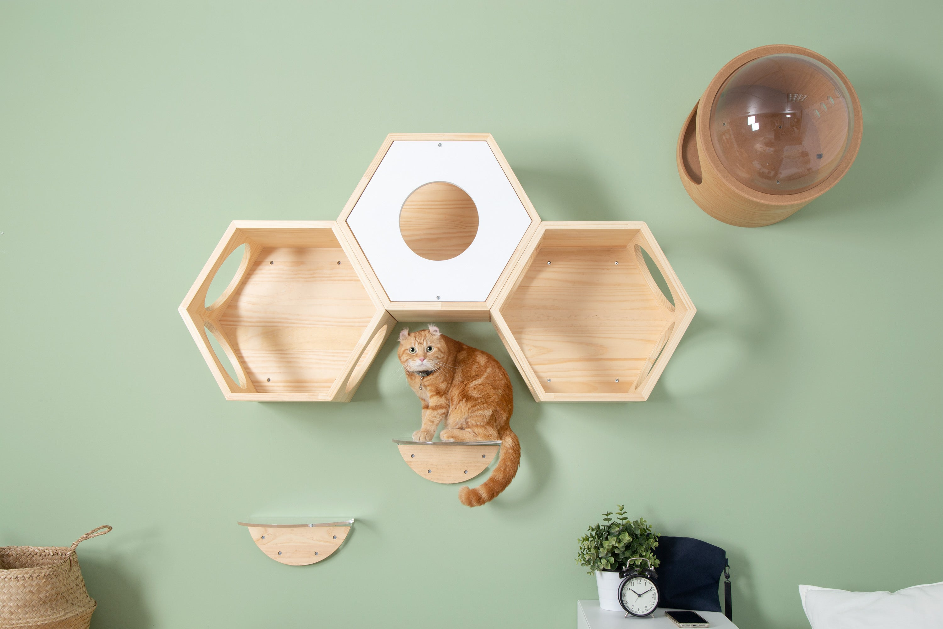 A brown cat sit on a transparent floating cat shelf