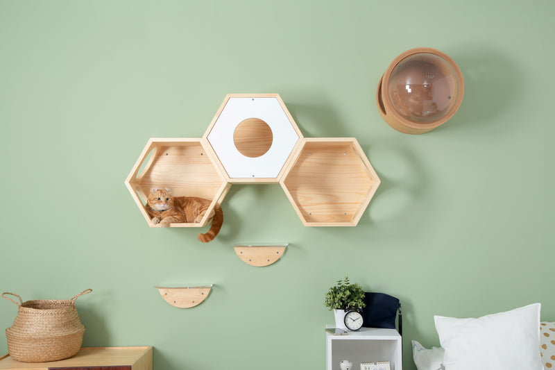 A brown cat perch on a hexagon shape cat shelf which is mounted on wall.
