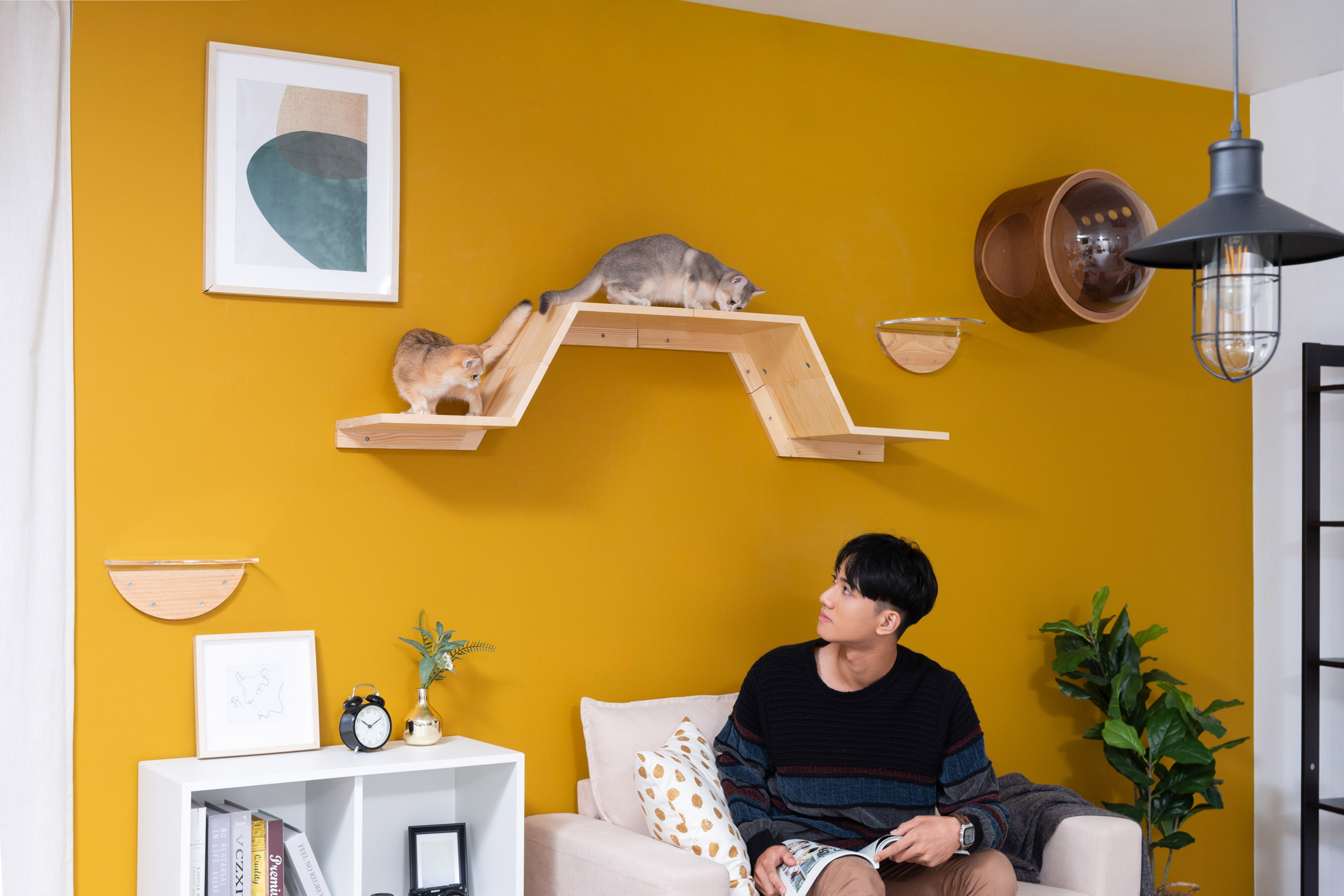 a man is watching the cats who are play on the floating cat shelves.The wall-mounted cat shelf is mounted on a yellow wall.