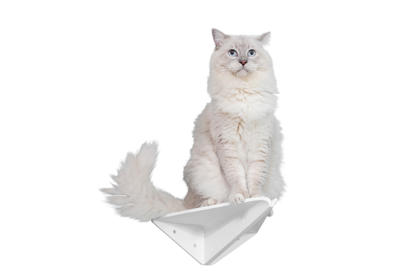 A white ragdoll cat stands on a aeroplane shape shelf