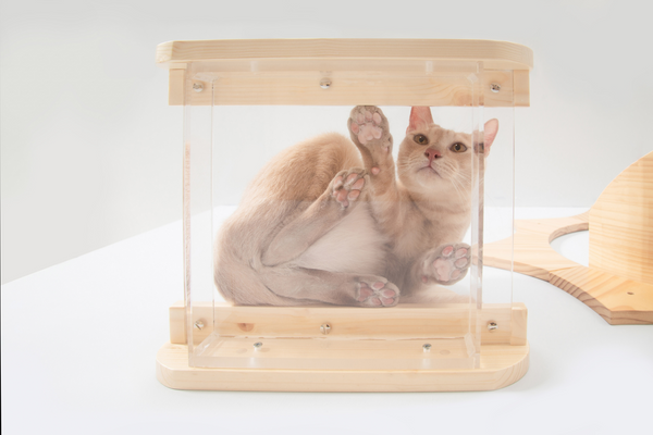 a brown cat looks down through a transparent cat shelf