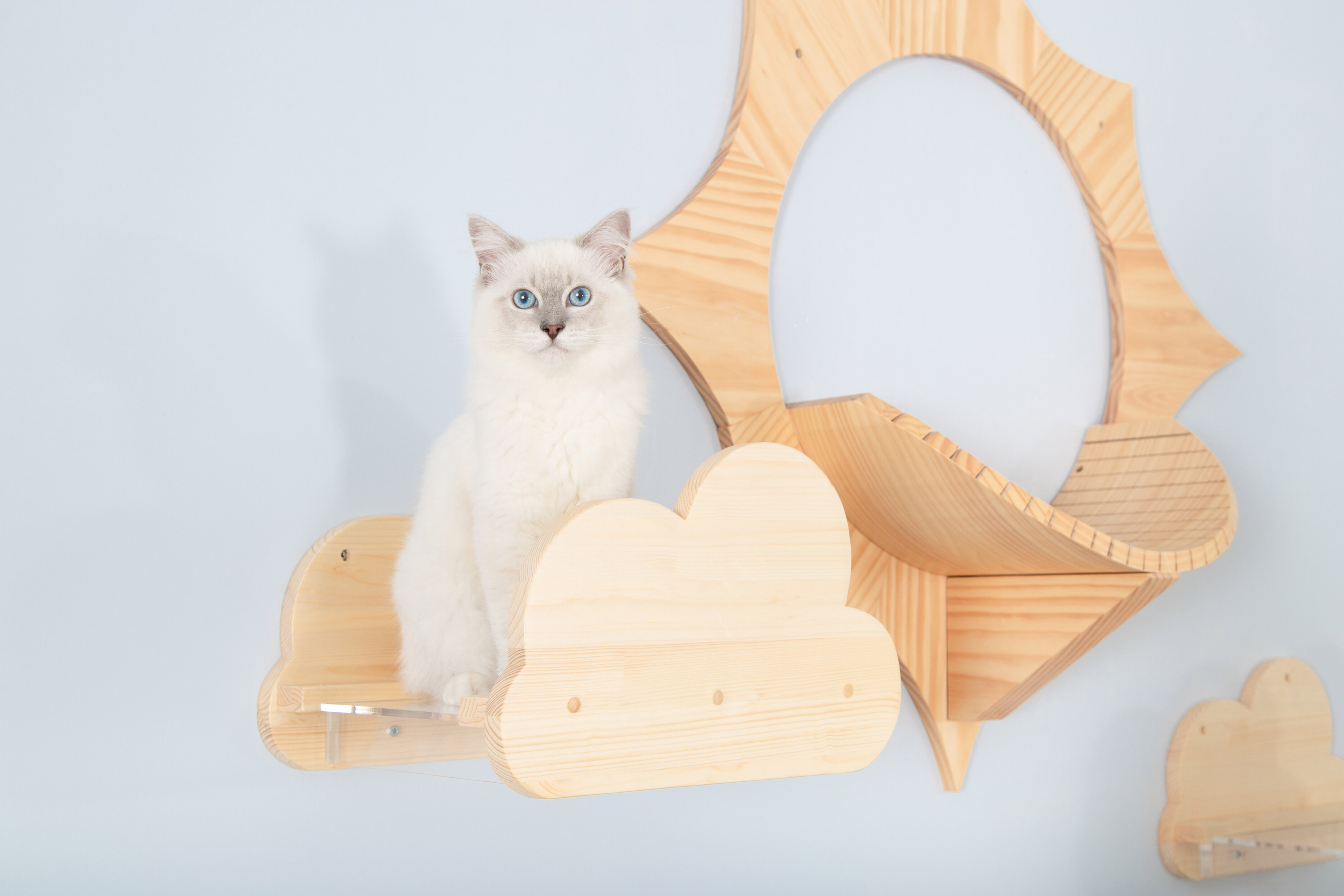 a white ragdoll cat stands on the wall-mounted cat shelf which is a cloud shape.