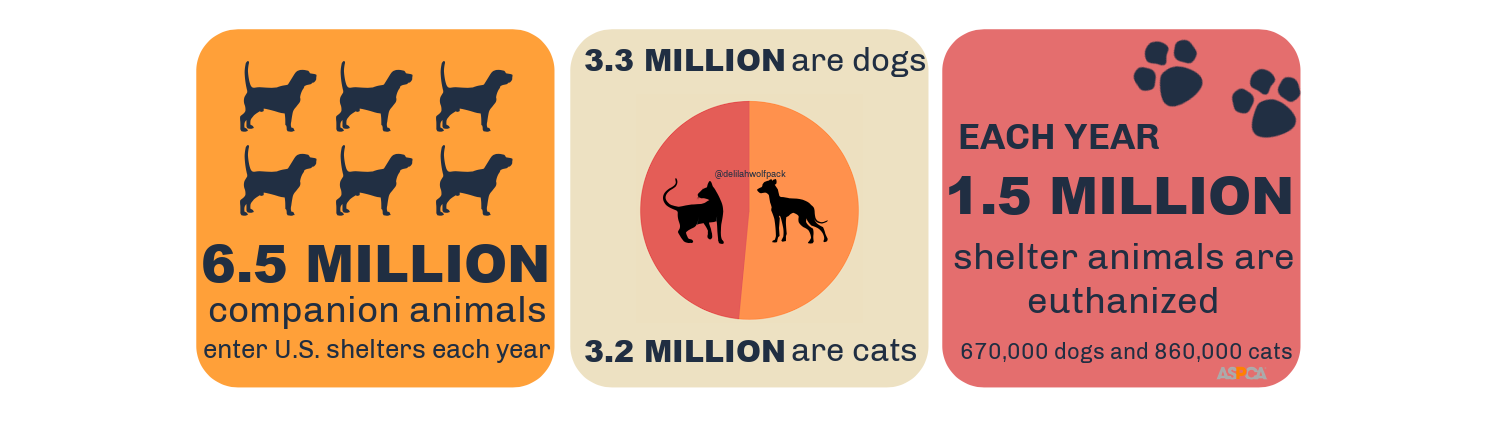 adopt don't shop infographic