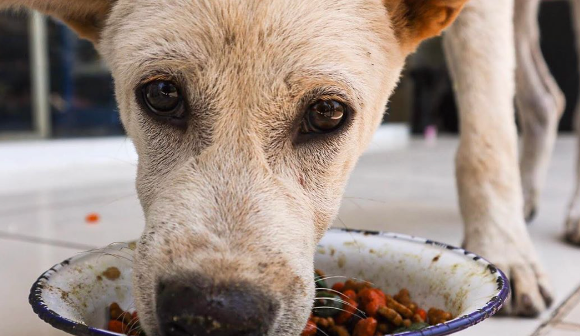 how you can help homeless animals