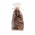 Natural Sugar Pine Cone - 1 piece - Jodhshop