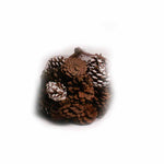 Frosted and Natural Pine Cones in Net - 20 ounces - Jodhshop