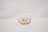 Sand Dollar Sola Flowers - 2.4in / 15pack - Jodhshop