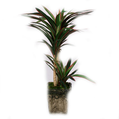Yucca Artificial Plant in Pot - 14 inches - Jodhpuri Online