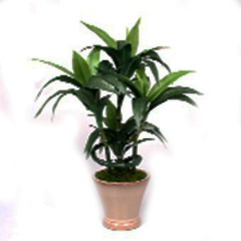 Dracaena Artificial Plant in Ceramic Pot - 18 inches - Jodhshop