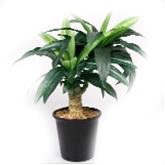 Dracaena Artificial Plant in Ceramic Pot - 14 inches - Jodhshop