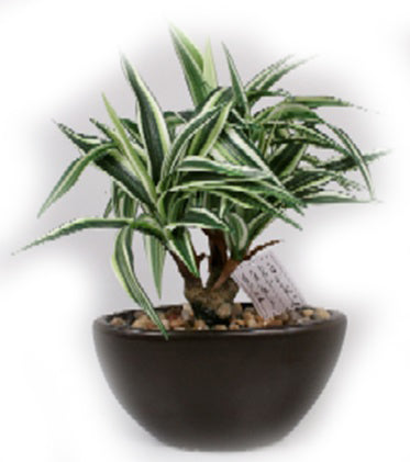 Dracaena Artificial Plant in Ceramic Pot - 16 inches - Jodhshop