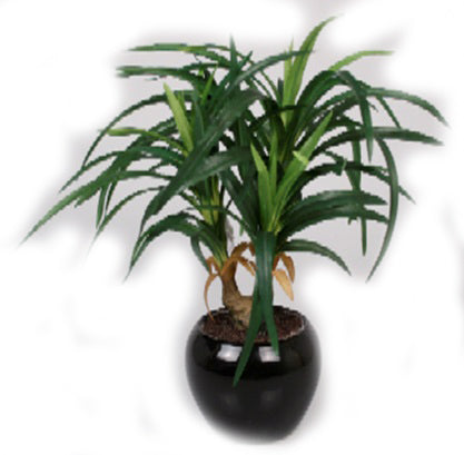 Yucca Artificial Plant in Ceramic Pot - 13 inches