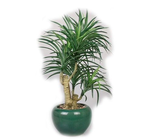 Yucca Artificial Plant in Ceramic Pot - 23 inches - Jodhshop